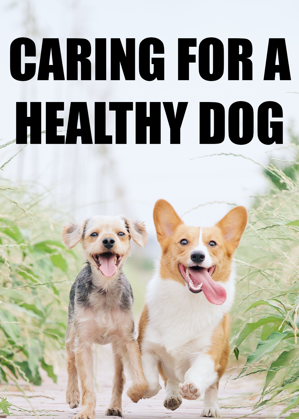 Caring For A Healthy Dog